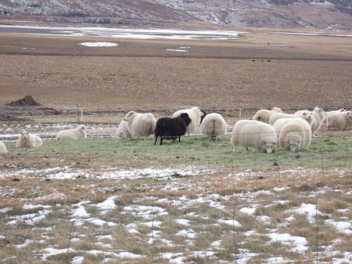 I like the Black Sheep -- think it´s his eyes...